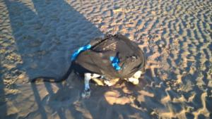 Wirral Globe: Appeal to trace owner of pet dog 'Connor' - tied into a backpack and thrown in the sea at New Brighton - continues. Click here to read more